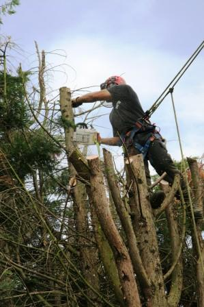 Wildwood Tree Services