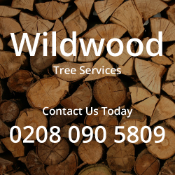 Wildwood Tree Services | Tree surgeons Richmond